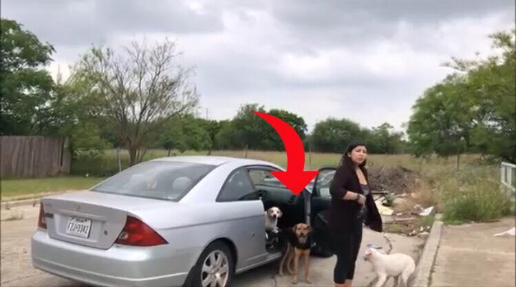 Hund parrer kvinde